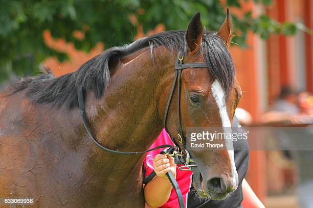Itchy Nee in the mounting yard after winning Royal Hotel Benalla Maiden Plate on January 30 2017 in Benalla Australia