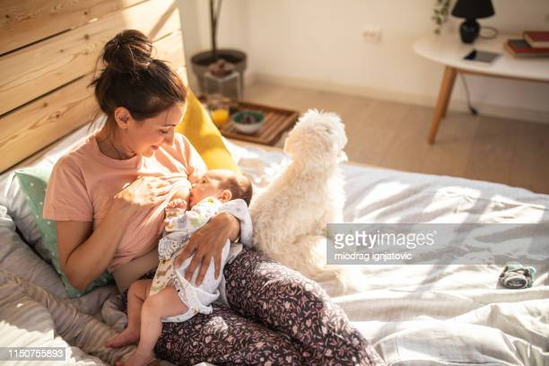 it's a special time for them to bond - woman breastfeeding animals stock photos and pictures