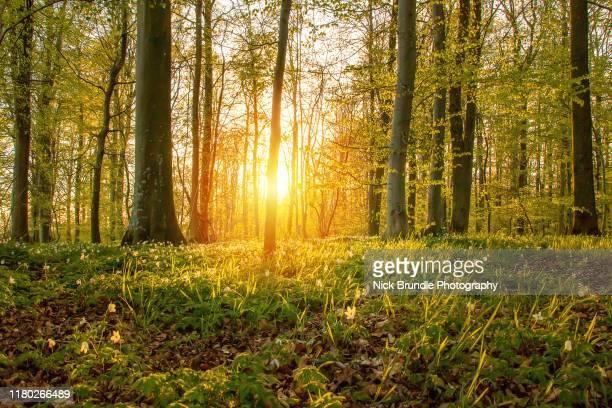 it's a spring thing - beech tree stock pictures, royalty-free photos & images