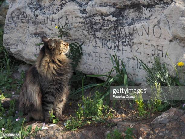 It's All Greek To Me! (Cat 'Reading' Ancient Greek Inscription)