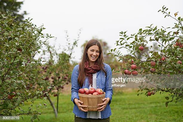 it's apple picking season! - apfelbaum stock-fotos und bilder