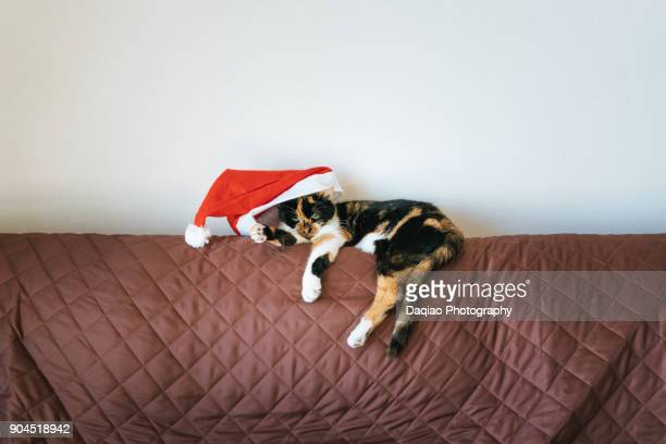 it's christmas! - cat costume stock photos and pictures