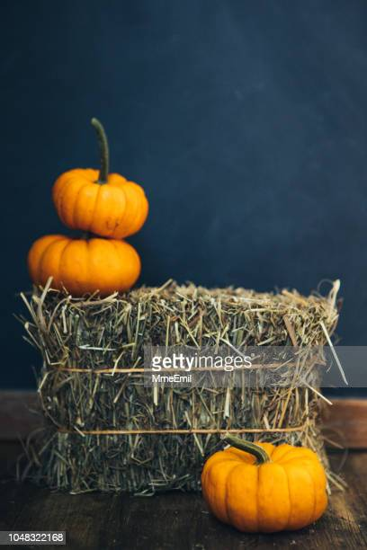 it's halloween time - fun background stock pictures, royalty-free photos & images