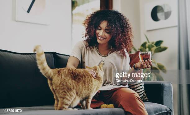 it's just me and you today, kitty - domestic cat stock pictures, royalty-free photos & images