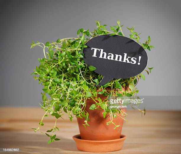 it's thyme to say thanks - thanks quotes stock pictures, royalty-free photos & images