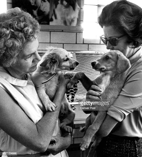 It's time for fun and frolic puppy style as two 10weekold residents of the Dumb Friends League receive undivided attention of Mrs James Arneill Jr...