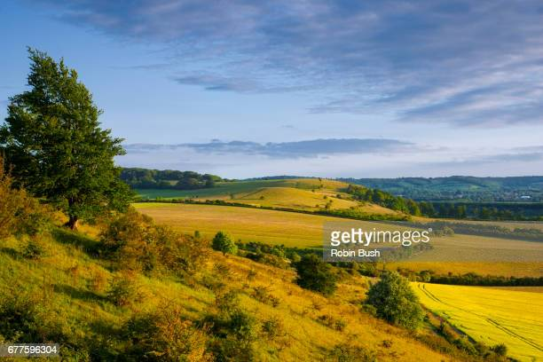 ivinghoe hills, looking towards pitstone hill - buckinghamshire stock pictures, royalty-free photos & images