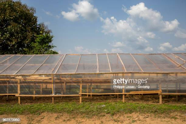 ivory coast. cocoa drying facility. - côte d'ivoire stock pictures, royalty-free photos & images