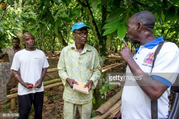 Ivory Coast Cocoa farmers' cooperative members