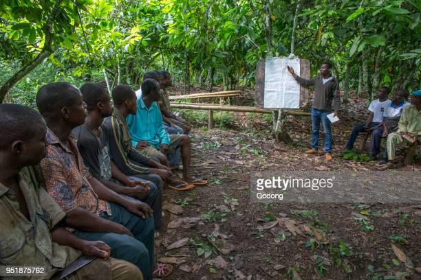 Ivory Coast Cocoa farmers' instruction