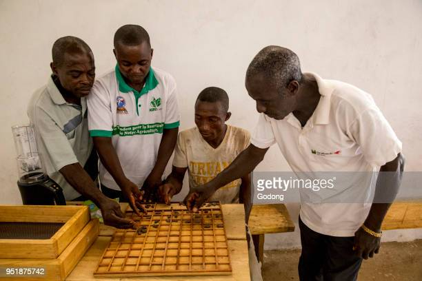 Ivory Coast Cocoa producers calibrating beans
