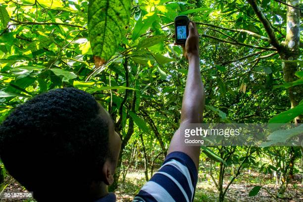 Ivory Coast Geographical localization of a cocoa plantation with a GPS