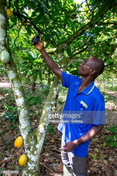 Ivory Coast. Geographical localization of a cocoa plantation with a GPS.