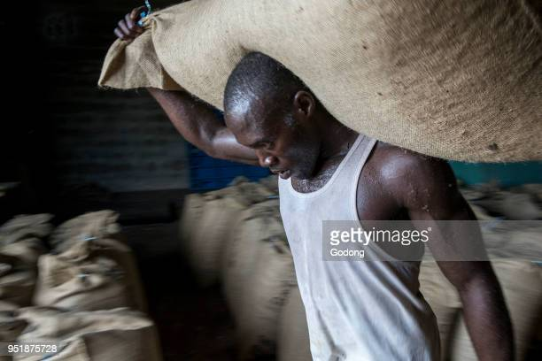 Ivory Coast Worker carrying cocoa bags