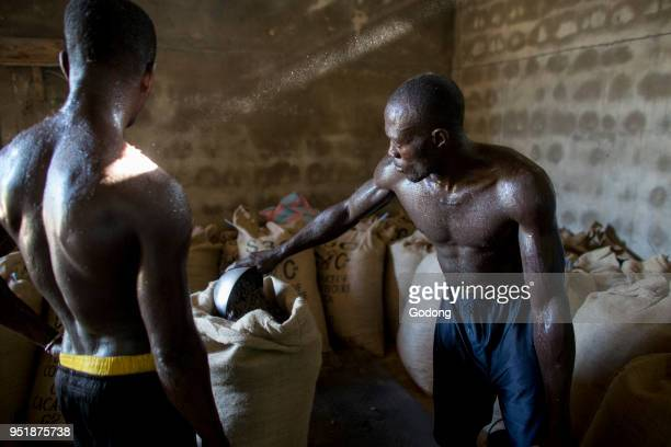 Ivory Coast Workers filling and weighing cocoa bags