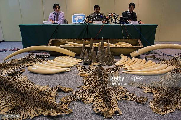 Ivory tusks rhino horns and leopard skins seized by Hong Kong customs officials are displayed during a press conference on August 7 2013 in Hong Kong...