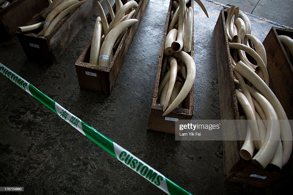 Hong Kong Customs Seize Endangered Species Cargo : News Photo