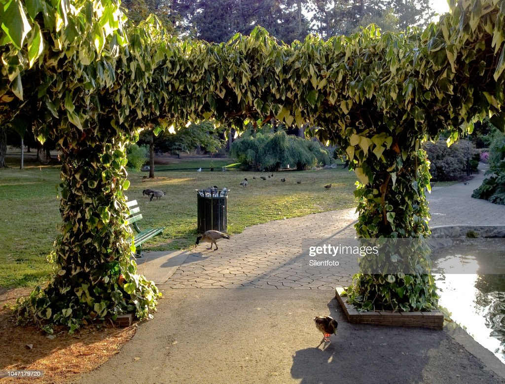 Ivy Covered Pergola Around Pond With Birds High Res Stock Photo ...