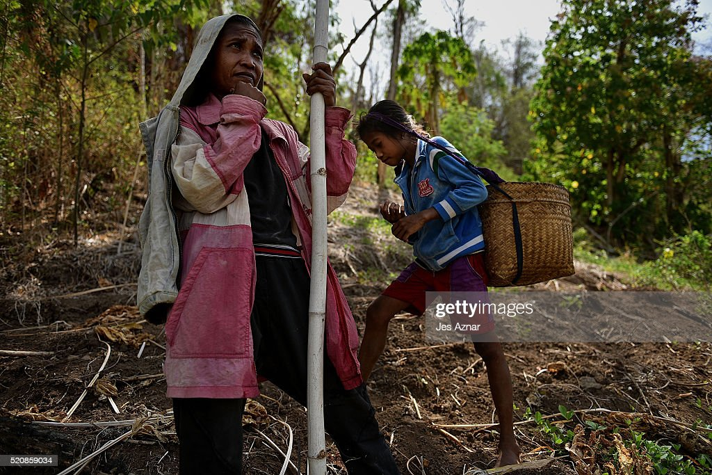 COTABATO, MINDANAO, PHILIPPINES - APRIL 10: Ivy Erames, 31, and her daughter Genevie, 11, forage for fruits and and other edible plants around their village in Kabuling, Kabacan on April 10, 2016 in Cotabato, Mindanao, Philippines. Ivy and her family of 7 lives in a poor and underdeveloped farming community in the mountains of North Cotabato province where food aid from government agencies is scarce. 'We only eat one meal a day for nearly six months now, if we are lucky enough to sell firewood in the nearby market, then we can buy rice' says Ivy. The heatwave brought on by the El Nino weather phenomenon has severely affected food and water supplies in many countries. Based on reports, 85 percent of the whole Philippines will experience the effects of the drought and around 12 million Filipinos who rely on agriculture will directly be affected. In southern Philippines, where farmers lacked agricultural infrastructures and farming subsidies, the population faced impending hunger during the drought and two demonstrators were left dead and dozens of people injured after police dispersed thousands of drought-hit farmers in early April.