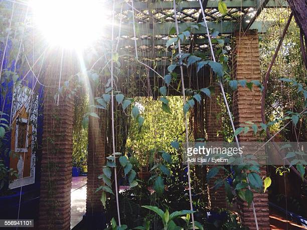 ivy growing between columns - between stock pictures, royalty-free photos & images