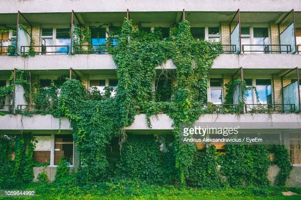 ivy growing on building in city - creeper stock pictures, royalty-free photos & images