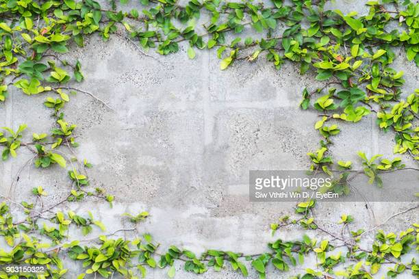 ivy growing on wall - wall building feature stock pictures, royalty-free photos & images