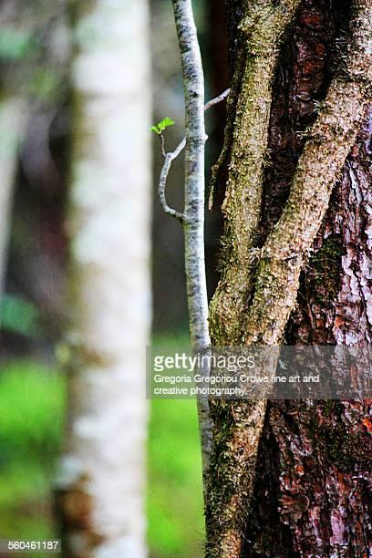 ivy growth on tree - gregoria gregoriou crowe fine art and creative photography. stock-fotos und bilder