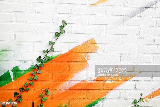 Ivy on a wall with graffiti