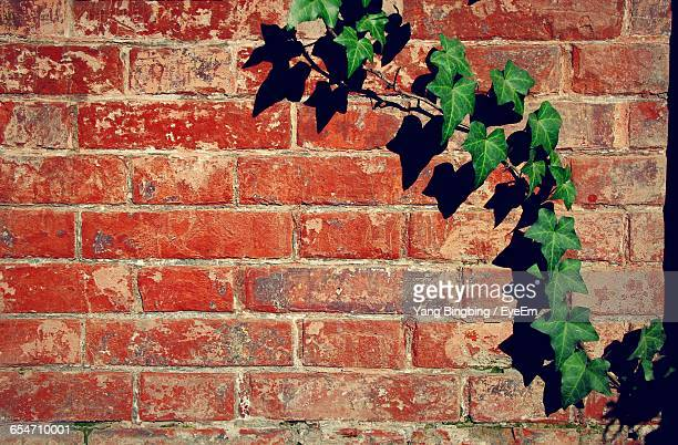 Ivy On Red Brick Wall