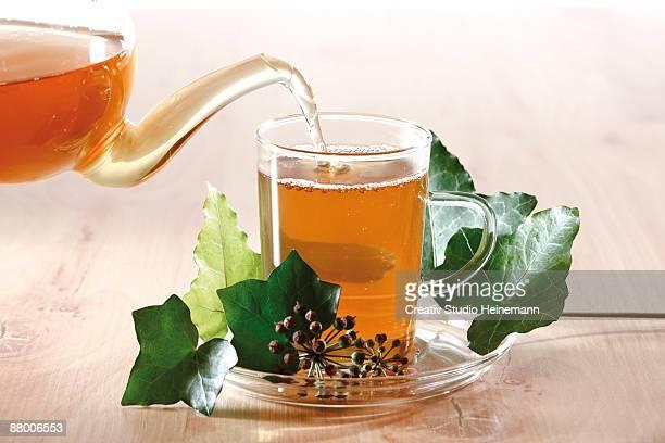 Ivy tea ((Hedera helix)