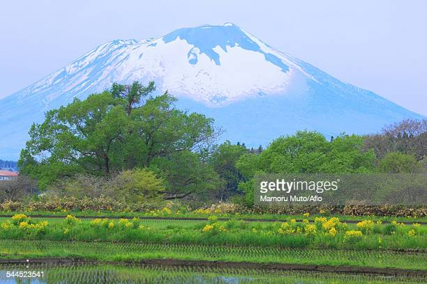 iwate prefecture, japan - iwate prefecture stock pictures, royalty-free photos & images