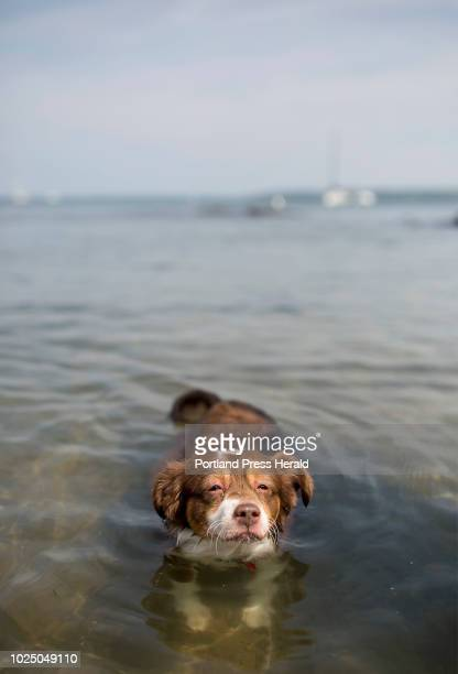 Izaya keeps his head above water while beating the heat at East End beach with his owners Cassandra Donder and Peyton Warren on Tuesday August 28 2018