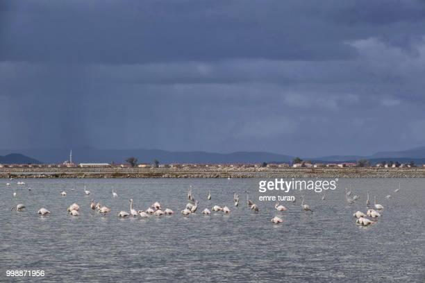 izmir bird sanctuary(DSCF9707-1.jpg)