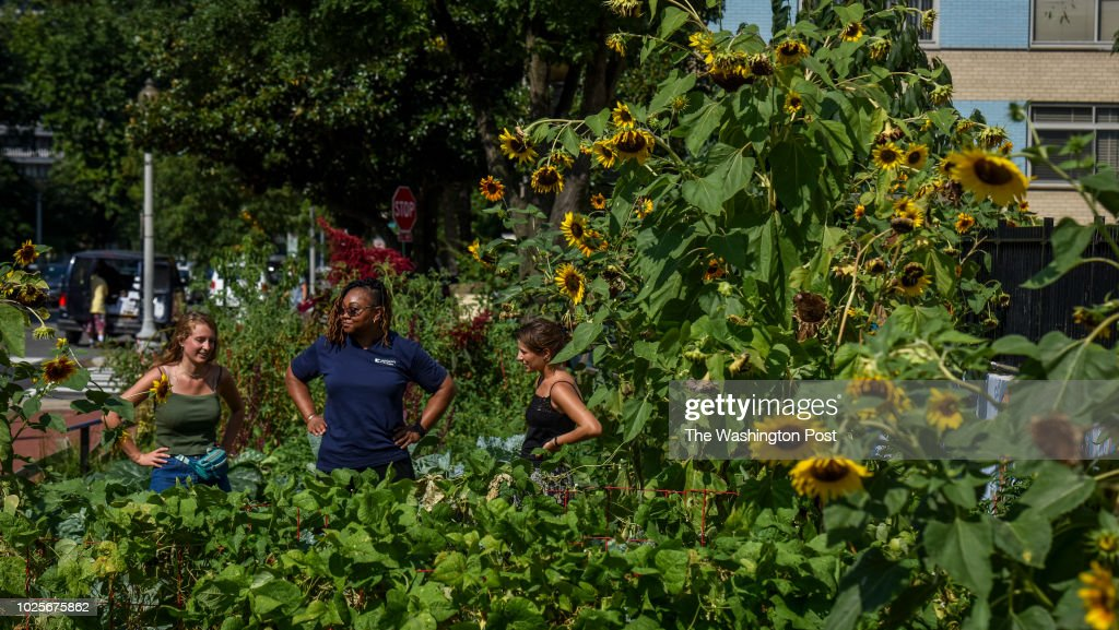 Izzy Moody, L, Cheryl Bell, C, and Lizzy Farrante chat while waiting for a portrait in the George Washington University urban garden on Wednesday, August 29, 2018, in Washington, DC. Students grow food in the garden that is donated to Miriam's Kitchen, which feeds meals to 4,000 homeless people each year. Farrante and Moody, both seniors at the university, are co-managers of the garden and Bell is the executive chef at Miriam's Kitchen.