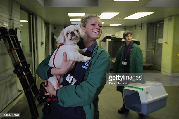 Izzy the dog is taken to be reunited with it's owner at Heathrow Airport's Animal Reception Centre on January 25 2011 in London England Many animals...