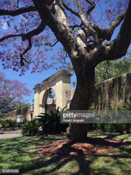 Jacanda trees in flower outside a sandstone wall and Victorian entrance gateway.