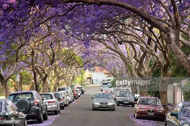 Jacaranda Street