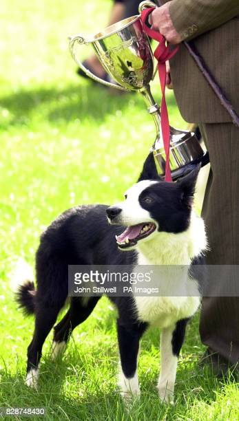 Jack Burke and his dog Fly, with Mr Burke's trophy for the oldest competitor at the Welsh national sheepdog trials in Glanusk Park, just outside...
