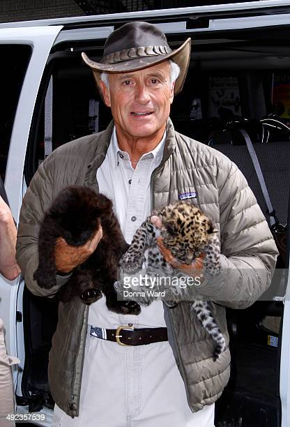 """Jack Hanna appears with Amurs outside the """"Late Show with David Letterman"""" at Ed Sullivan Theater on May 19, 2014 in New York City."""