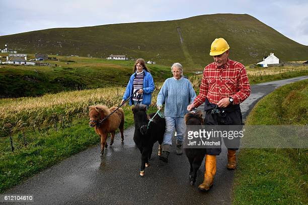 Jack Penny Sheila and Jim Grear walk their ponies to the Island of Foula ferry where they will be loaded for market on Shetland on October 1 2016 in...