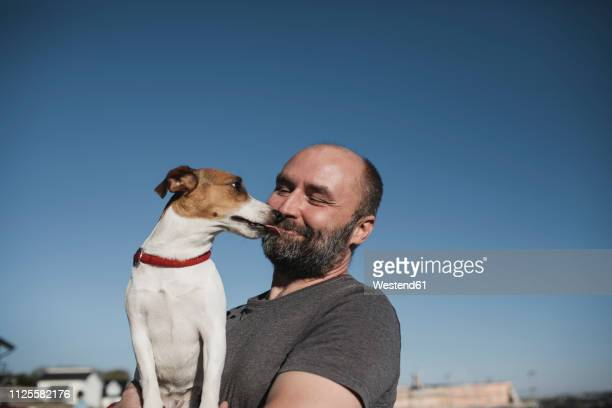 Jack Russel Terrier licking face of  smiling owner