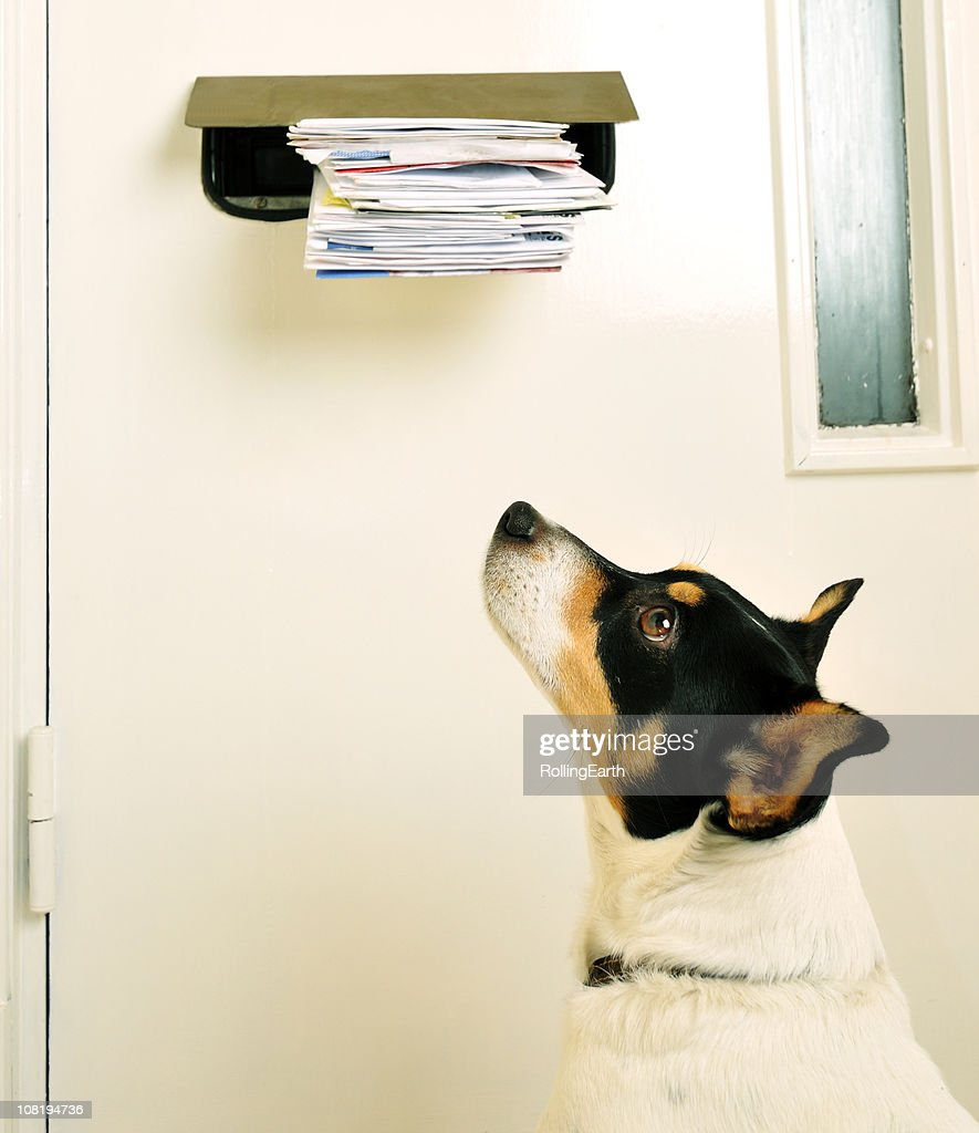 Jack Russell and the Post : Stock Photo