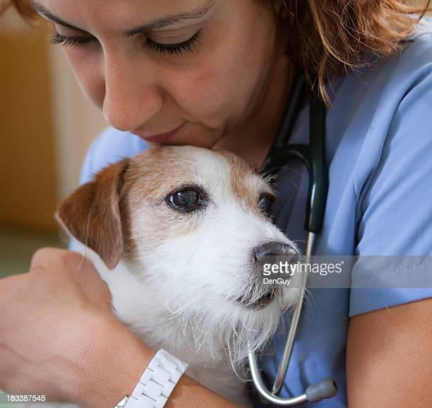 Jack Russell réconfortant par vétérinaire en Clinique vétérinaire