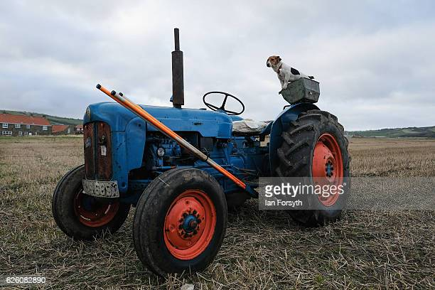 Jack Russell terrier dog sits and waits for its owner to return during the annual ploughing match on November 27, 2016 in Staithes, United Kingdom....