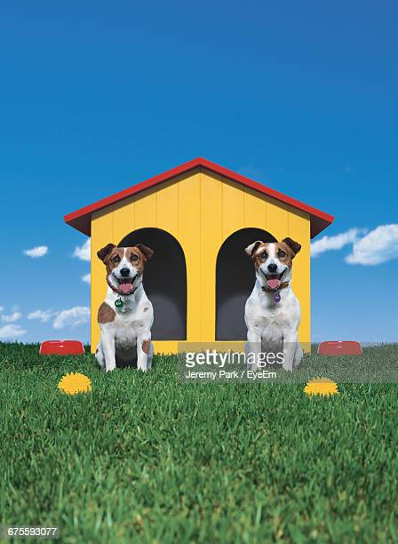 Jack Russell Terriers Sitting By Kennel On Grassy Field Against Sky