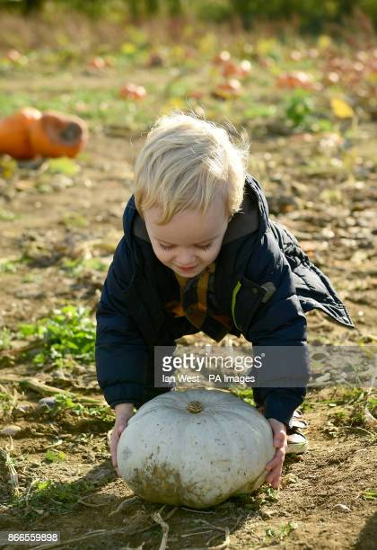 Jack West picking his pumpkin for Halloween at the Pumpkin Patch in Basildon Essex