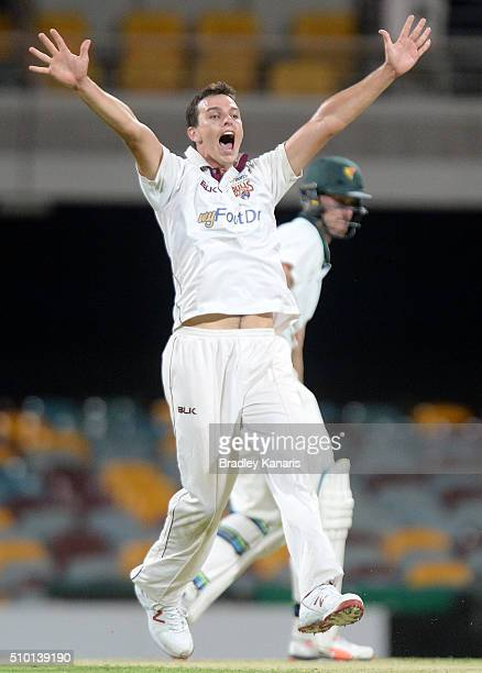 Jack Wildermuth of Queensland takes the wicket of Beau Webster of Tasmania during day one of the Sheffield Shield match between Queensland and...