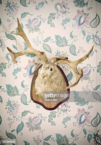 Jackalope の頭部剥製