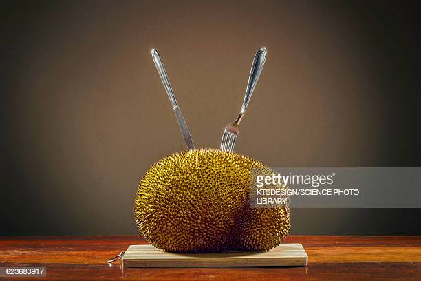 jackfruit on table - jackfruit stock photos and pictures