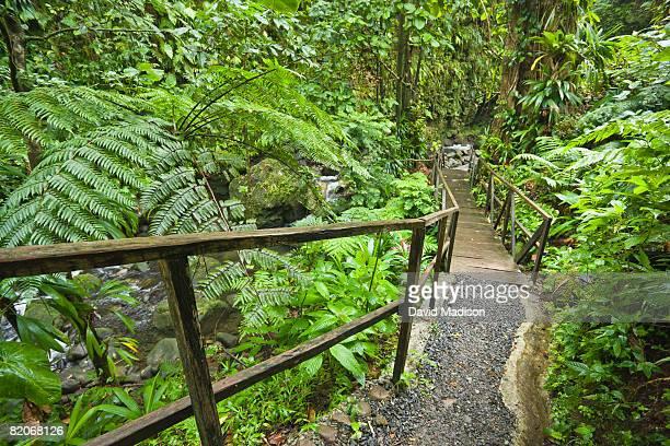 jacko steps leading to layou river in domenica. - dominica fotografías e imágenes de stock
